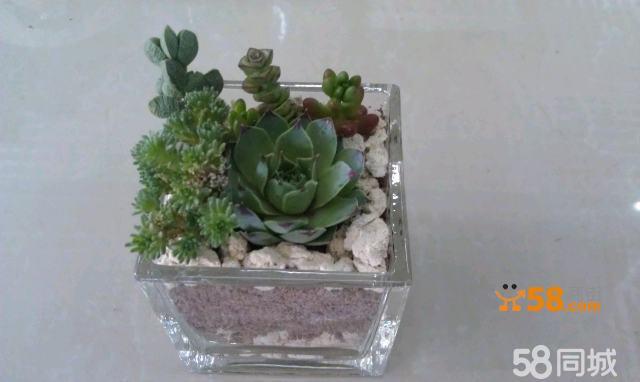 多肉植物组合 透明方形玻璃容器