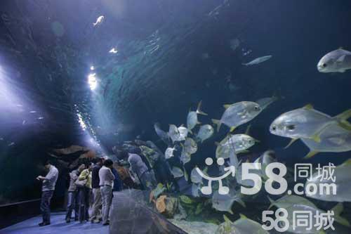 天津海昌极地海洋世界+外滩+洋货市场一日游